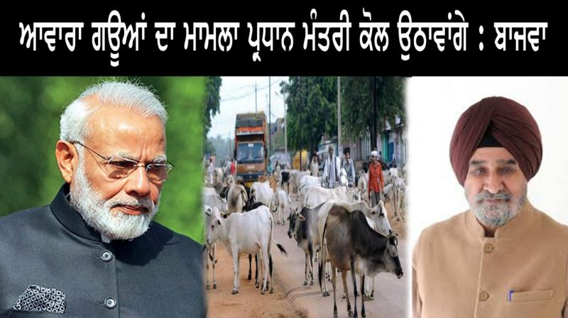 Bajwa will take issue of stray cows to PM