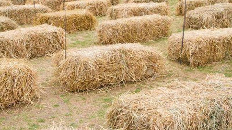 High court stops collecting fines from farmers for burning straw