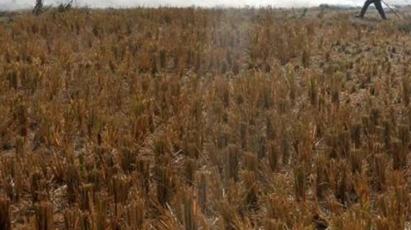 Punjab Government in Action 196 Farmers Arrested For Burning Stubble