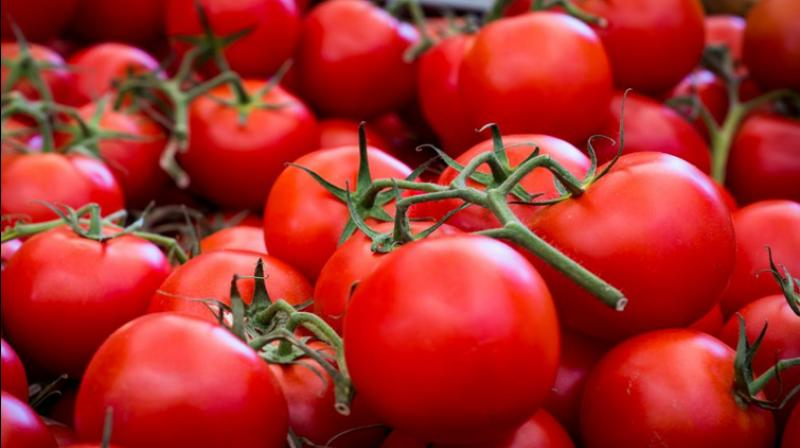 Tomatoes can increase men's fertility