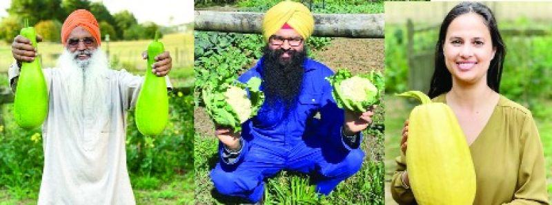 organic Punjabi vegetables