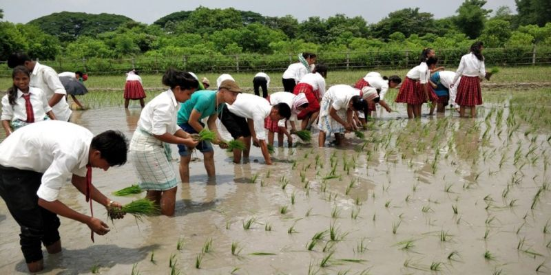 Students participating in sowing crops