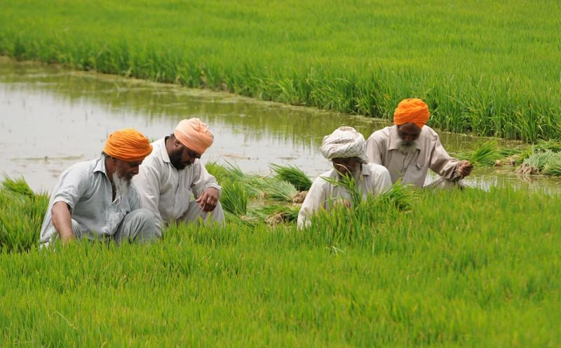 Farmers in Field